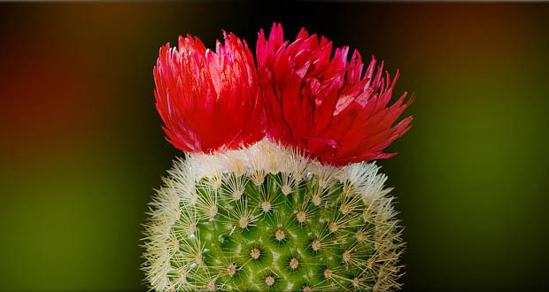 God's Little Flower Cactus: A Harder Path to Holiness