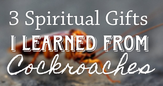 3 Spiritual Gifts I Learned from Cockroaches