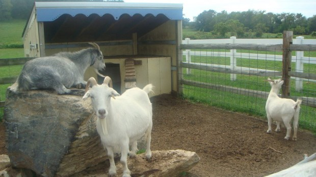 Simple Ways We Celebrate The First Day of School - A Petting Zoo