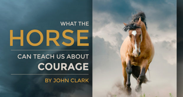 What the Horse Can Teach Us About Courage - by John Clark