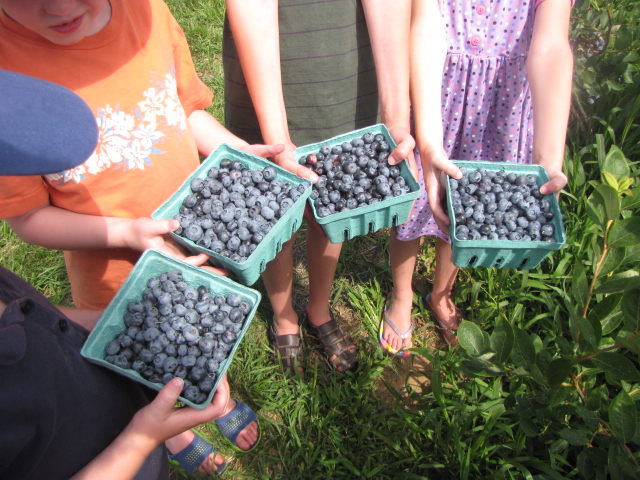 The Barrett Family | Berry Hunting - Blueberry Style
