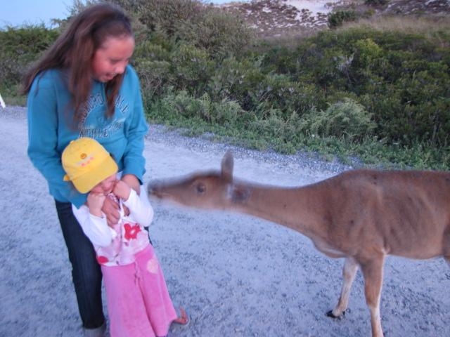The Barrett Family |Oh Deer!