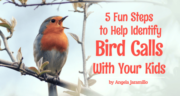 5 Fun Steps to Help Identify Bird Calls With Your Kids - by Angela Jaramillo