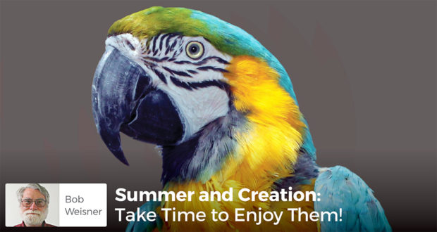 Summer & Creation: Take Time to Enjoy Them - Bob Weisner
