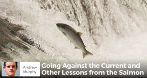 Going Against the Current and Other Lessons from the Salmon - Andrew Murphy
